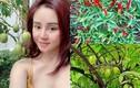 Đột nhập khu vườn ngập rau quả trong biệt thự của Vy Oanh