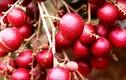 Từ nông dân thành đại gia sau 1 đêm nhờ trồng loạt trái cây độc