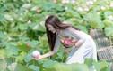 """Chụp ảnh sen: Hoa nở rộ, chủ đầm """"hốt"""" bạc triệu mỗi ngày"""