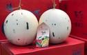 Dưa sữa Nhật nửa triệu/quả, đắt khách ngày nắng nóng