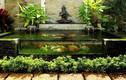5 tiểu cảnh trong nhà được ưa chuộng nhất tại Việt Nam