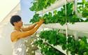 Mỏi mắt ngắm 'nông trại mini' xanh mướt trong nhà sao Việt