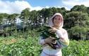Vung tay mua liền 50 hecta đất Đà Lạt trồng rau ăn, Lý Nhã Kỳ giàu cỡ nào?