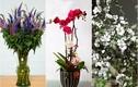 Gợi ý những loại hoa độc lạ, giá mềm chưng Tết sang nhà