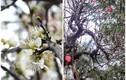 Những giống hoa rừng có tiền cũng chưa chắc mua được khách ùn ùn tìm mua dịp Tết