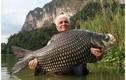 Cá hô quý hiếm cỡ nào...xẻ thịt có thể bị phạt 1 tỷ?