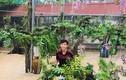 """Mãn nhãn vườn lan """"khủng"""" trị giá tiền tỷ của các 9X Việt"""