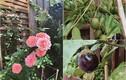 Lóa mắt tinh thự sang trọng, có cả khu vườn ngập rau trái của Hà Tăng