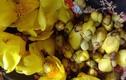 """Trà hoa vàng siêu đắt nhà giàu Việt săn lùng, chậm chân 1 bước là """"hết hàng"""""""
