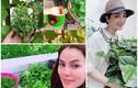 Mỏi mắt ngắm vườn rau sạch trong biệt thự tiền tỷ của Hoa hậu Việt
