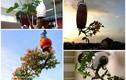 Chiêm ngưỡng những chậu bonsai mọc ngược độc nhất vô nhị