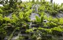 Nhà Đà Nẵng ghép 700 viên đá ong xanh mát như vườn treoBabylon