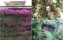 Ngẩn ngơ ngắm biệt thự phủ kín cây xanh giữa Hà Nội
