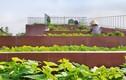 """Mãn nhãn vườn rau """"bậc thang"""" trên mái nhà ăn quanh năm không hết"""
