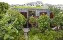 Xanh mướt mắt những ngôi nhà phủ kín cây xanh chống chọi nắng nóng