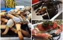 """Đại gia Việt """"vung tiền"""" thưởng thức hải sản nhập ngoại khổng lồ"""