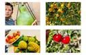 Mãn nhãn vườn hoa quả sai lúc lỉu trong biệt thự ở Mỹ của Bằng Kiều