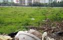 Bị hủy dự án nhà ở Bắc Từ Liêm, Cty Sơn Hà đang làm ăn thế nào?