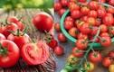 Bí quyết chọn cà chua ngon chín tự nhiên, bà nội trợ nào cũng cần biết