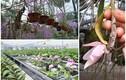 Đại gia 8X sở hữu vườn lan khủng, thu bạc tỷ mỗi tháng