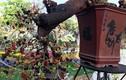 Loạt bonsai dáng quái, giá cả tỷ đồng khiến đại gia mê mệt