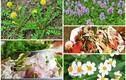 Bất ngờ 5 loại hoa ăn được ở Việt Nam, giá vỏn vẹn 0 đồng
