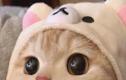 Fanpage thú cưng thu hút gần 2,5 triệu like