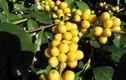 Cà phê Việt Nam ngon nhất thế giới: Là thương hiệu nào?