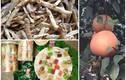 Bưởi đỏ tiến vua, kẹo dừa 7 vị hút khách dịp cuối năm
