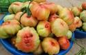 """Đắt gấp đôi loại thường, cà chua múi Sơn La vẫn """"hút"""" khách Hà thành"""