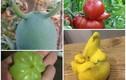 """""""Phì cười"""" trước loạt hoa quả hình dáng kỳ quặc trong vườn"""