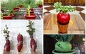 Củ cải đỏ, su hào, cà rốt lên đời thành bonsai chơi Tết