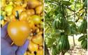 2 loại quả không ăn được vẫn đắt khách dịp Tết