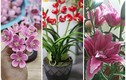 3 loại hoa độc lạ hút khách dịp Tết Tân Sửu 2021