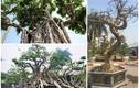 """Dàn bonsai thế lạ xuống phố """"thách thức"""" đại gia Hà Nội"""