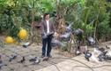 Nhà vườn rộng hàng nghìn m2 của nghệ sĩ Giang Còi