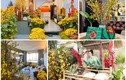 Nhà ngập hoa, cây cảnh như chợ xuân của các Hoa hậu Việt
