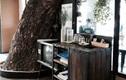 Kỳ lạ 10 ngôi nhà có cây đâm xuyên độc đáo nhất thế giới