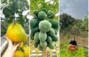 Vườn rau quả tốt um trong nhà Hoa hậu Đỗ Thị Hà