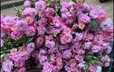 """Hoa dại ở quê mọc đầy bờ rào... lên phố """"đắt hàng"""" muốn mua cũng khó"""