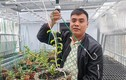 Chủ vườn nói gì về vụ giao dịch lan đột biến gần 300 tỷ đồng