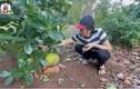 Khu vườn nghìn m2 trồng cây, nuôi gà của Hoài Linh ở Đồng Nai