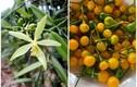 2 loại gia vị đắt bậc nhất TG trồng thành công ở Việt Nam