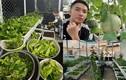 """Khu vườn rau củ sạch """"ăn không hết"""" của ca sĩ Phạm Trưởng"""