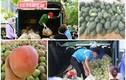Hoa quả đặc sản vào mùa giá mềm ở Hà Nội hút khách giữa đại dịch