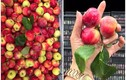 """""""Vén màn bí mật"""" loại táo mini Úc giá siêu rẻ bán đầy chợ mạng"""