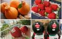 """5 loại trái cây """"siêu quý"""", có tiền chưa chắc mua được"""