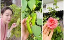 """""""Ngó"""" vườn rau tốt um trong biệt thự của Nhật Kim Anh"""