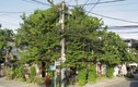 Phủ kín cây xanh, quán cà phê ở Hội An khiến báo ngoại ngỡ ngàng