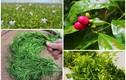 Ngã ngửa 6 loại rau đặc sản mọc hoang giá đắt hơn thịt